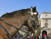 Horse at the horse guard parade. Royalty Free Stock Photos