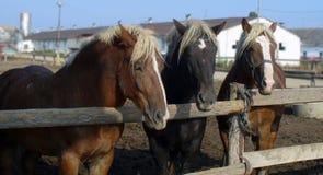 Horse, Horse Harness, Horse Like Mammal, Mustang Horse Royalty Free Stock Photos