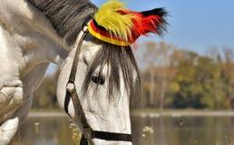 Horse, Horse Like Mammal, Bridle, Mane stock images