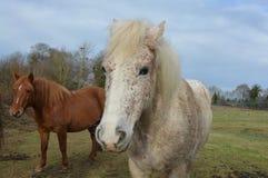 Horse, Horse Like Mammal, Fauna, Mane Royalty Free Stock Photos