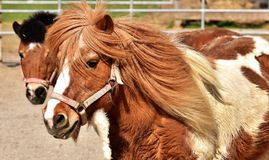 Horse, Horse Like Mammal, Mane, Bridle