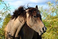 Horse, Horse Like Mammal, Mane, Fauna Stock Photo