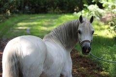 Horse, Horse Like Mammal, Mane, Mare Royalty Free Stock Image