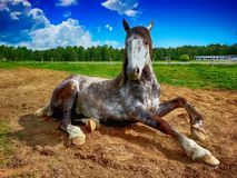 Horse, Horse Like Mammal, Mane, Mustang Horse Stock Photography