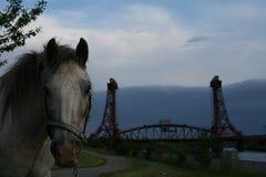 Horse, Horse Like Mammal, Sky, Stallion Stock Photos