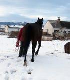 Horse, Horse Like Mammal, Stallion, Snow
