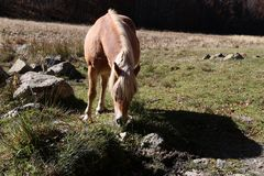 Horse. In mountain Royalty Free Stock Images