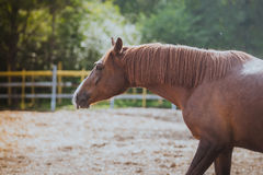 Free Horse, Horse S Neck, The Horse In The Summer, Stock Photography - 45871982