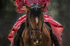 Horse, Horse Show, Horse Head Stock Images