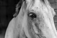Horse - horses eye Stock Photography