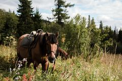 Horse horses forest mountain the trees stock photos