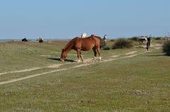 Horse. S in the marsh the park doñana Stock Photo