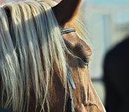 Horse,portrait,profile,animal Royalty Free Stock Photos