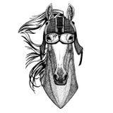 Horse, hoss, knight, steed, courser Animal wearing motorycle helmet. Image for kindergarten children clothing, kids. T. Animal wearing motorycle helmet. Image Stock Photos