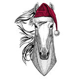 Horse, hoss, knight, steed, courser Christmas illustration Wild animal wearing christmas santa claus hat Red winter hat Stock Images