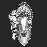 Horse, hoss, knight, steed, courser Cool animal wearing native american indian headdress with feathers Boho chic style. Horse, hoss, knight, steed, courser Hand Royalty Free Stock Photos