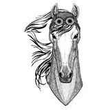 Horse, hoss, knight, steed, courser wearing aviator hat Motorcycle hat with glasses for biker Illustration for Royalty Free Stock Image