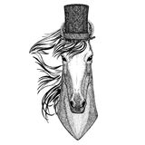 Horse, hoss, knight, steed, courser wearing cylinder top hat Royalty Free Stock Images