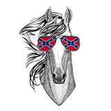 Horse, hoss, knight, steed, courser wearing glasses with National flag of the Confederate States of America Usa flag Royalty Free Stock Image