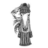 Horse, hoss, knight, steed, courser wearing knitted hat and scarf Stock Photography