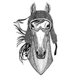 Horse, hoss, knight, steed, courser wearing vintage motorcycle helmet Tattoo, badge, emblem, logo, patch, t-shirt Stock Photography