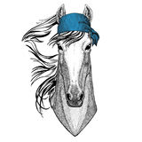 Horse, hoss, knight, steed, courser Wild animal wearing bandana or kerchief or bandanna Image for Pirate Seaman Sailor Stock Photos