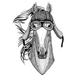 Horse, hoss, knight, steed, courser Wild animal wearing biker motorcycle aviator fly club helmet Illustration for tattoo Stock Image