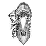 Horse, hoss, knight, steed, courser Wild animal wearing indian hat Headdress with feathers Boho ethnic image Tribal Stock Image