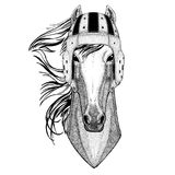 Horse, hoss, knight, steed, courser Wild animal wearing rugby helmet Sport illustration Stock Images