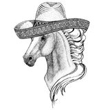 Horse, hoss, knight, steed, courser Wild animal wearing sombrero Mexico Fiesta Mexican party illustration Wild west Stock Image