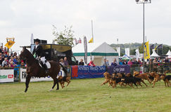 Horse and Hounds Stock Photos