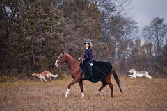 Horse-hunting with ladies in riding habit. Costumes. Historical reconstruction of famous XIXth century russian hounds hunting by horse club Avanpost Royalty Free Stock Photography