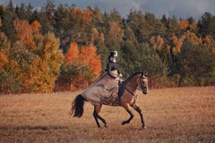 Horse-hunting with riders in riding habit Stock Photography
