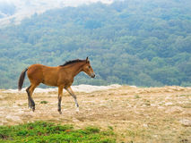 Horse hurrying on the field Royalty Free Stock Photography