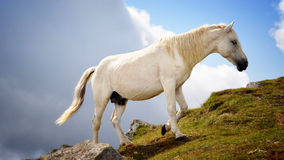 Horse. I have met this horse in the mountains. Height more than 2000 meters. Horses pasters at shuch height Royalty Free Stock Photo
