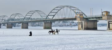 By horse on the ice rink Stock Photography