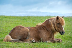 Horse Royalty Free Stock Images