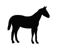 Horse icon illustrated Stock Photo