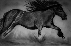 Horse illustration. Drawn in black and white Stock Images