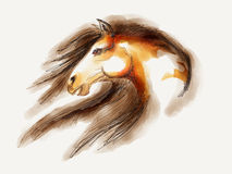 Horse head Mustang. Horse head illustration White and brown Stock Photo