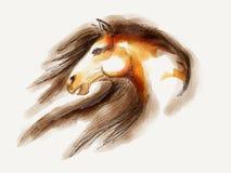 Horse head Mustang stock illustration