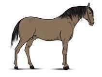 Horse illustration isolated on white background stock photos