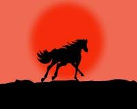 Horse illustration. Stock Image