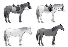 Horse,  illustration,  Royalty Free Stock Images