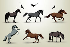 Horse illustrations Stock Images