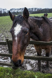Horse. Image of horse in field that has been out in the rain royalty free stock photos
