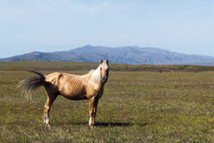 Horse. Image of horse standing on the field Royalty Free Stock Photography