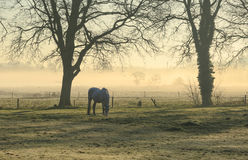 Free Horse In A Meadow Royalty Free Stock Photos - 53538758