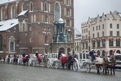 Free Horse In Front Of St Mary Cathedral In Krakow, Poland Royalty Free Stock Images - 110289609