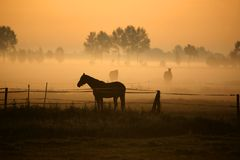 Horse In Morning Fog Royalty Free Stock Photos